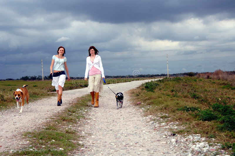 Walking dogs on country road royalty free stock photos