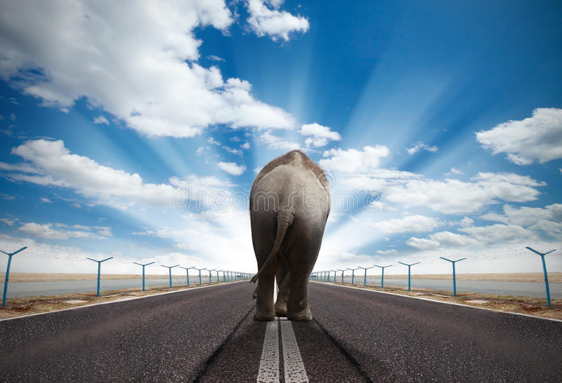 Download Walking elephant stock photo. Image of large, conceptual - 25664834