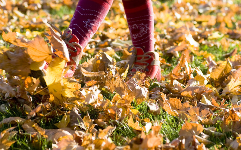 Walking through fall leaves. Feet walking through brightly colored fall leaves on the ground royalty free stock photography