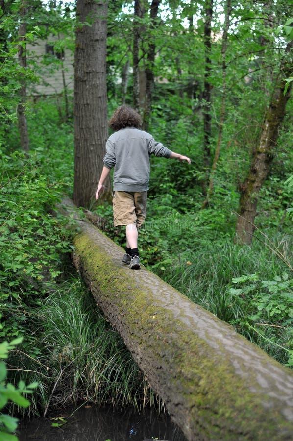Walking on a fallen tree stock photography
