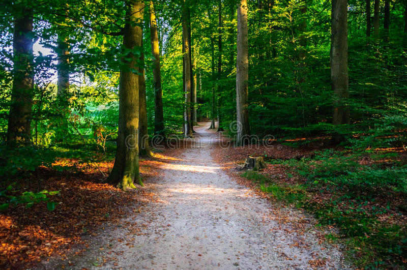Walking through the Forest of Arnhem, Netherlands (Gelderland, Region). A beautiful summer afternoon walk through the woods at Arnhem, Netherlands. &# royalty free stock images