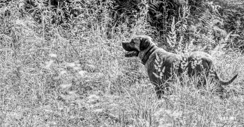 Lonesome dog exploring nature. Walking through the forest to explore nature`s wonders with a dog royalty free stock photography
