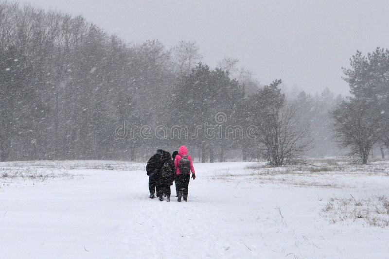 Forest and heavy snow. royalty free stock images