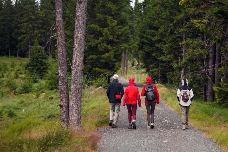 Walking group of hikers on a path near a meadow in the forest stock photo