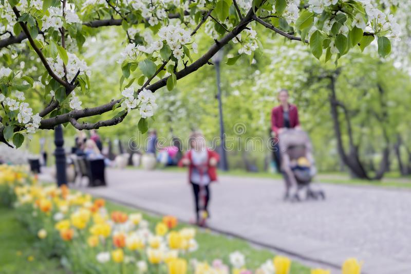 Walking happy people, families with children in park with tulips, flowers of sakura, cherry, apple blossoms, sunny day. Walking happy people, families with stock image