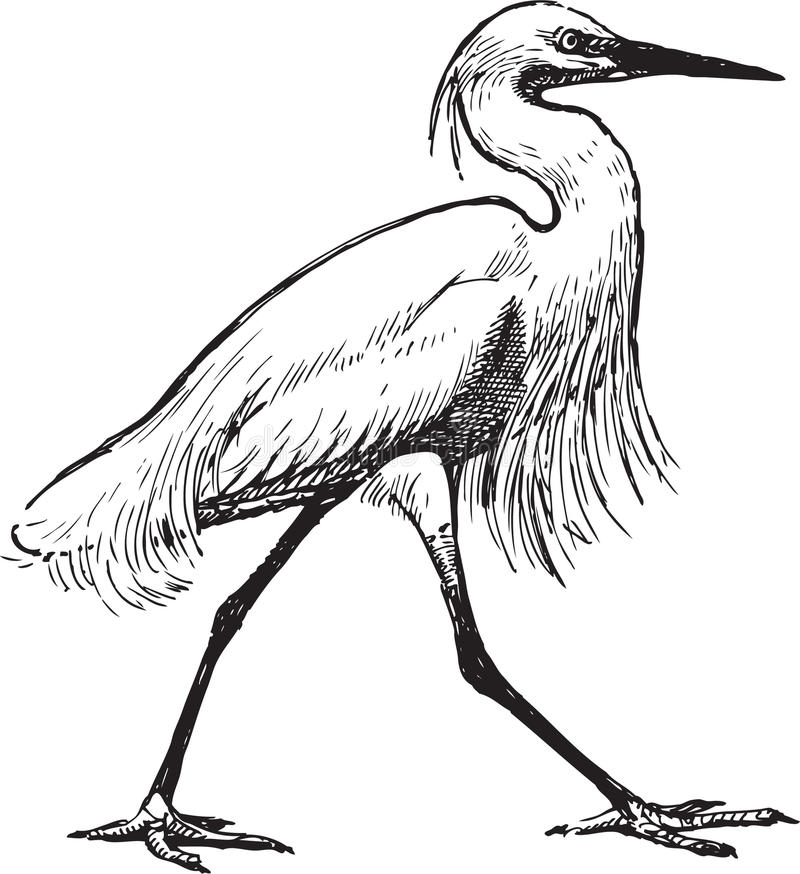 Free Walking Heron Royalty Free Stock Photography - 25194277