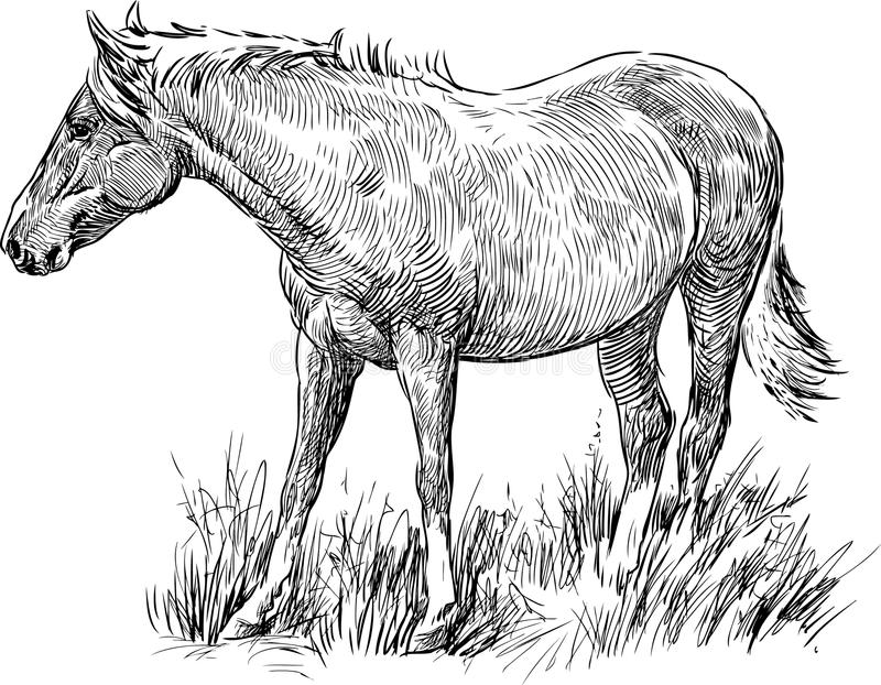 Download Walking horse stock image. Image of isolated, farm, grazing - 31899523