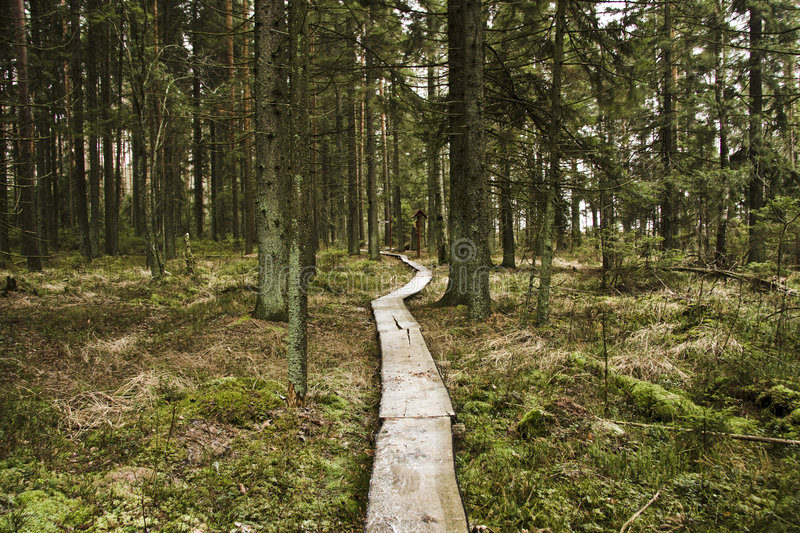 Download Walking Lane Of Boards In Forest Stock Photo - Image of autumnal, straight: 3923856