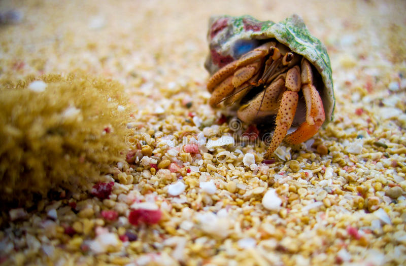 Walking mollusk. On the beach royalty free stock photos