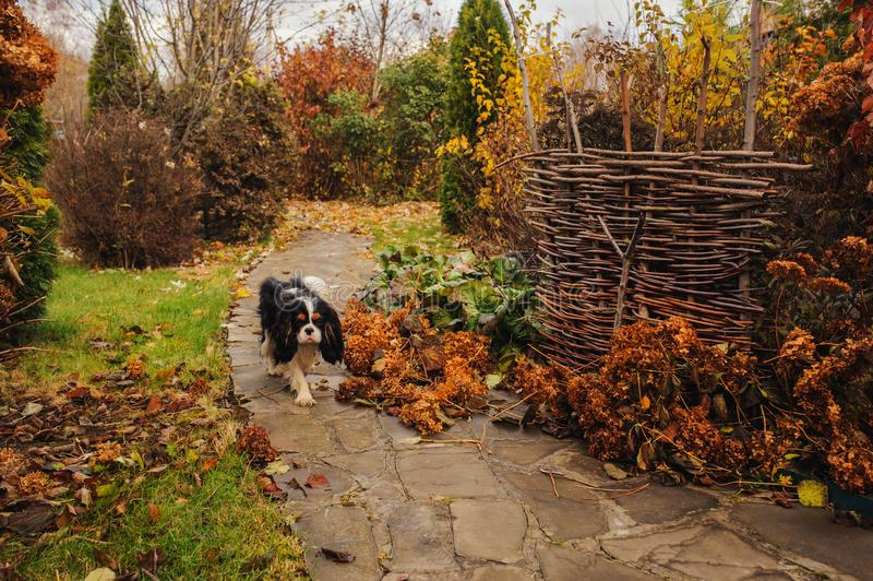 Walking in november garden. Late autumn view with rustic fence royalty free stock image