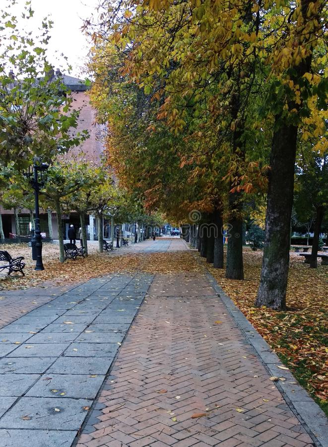 Walking through the park one autumn afternoon royalty free stock photo
