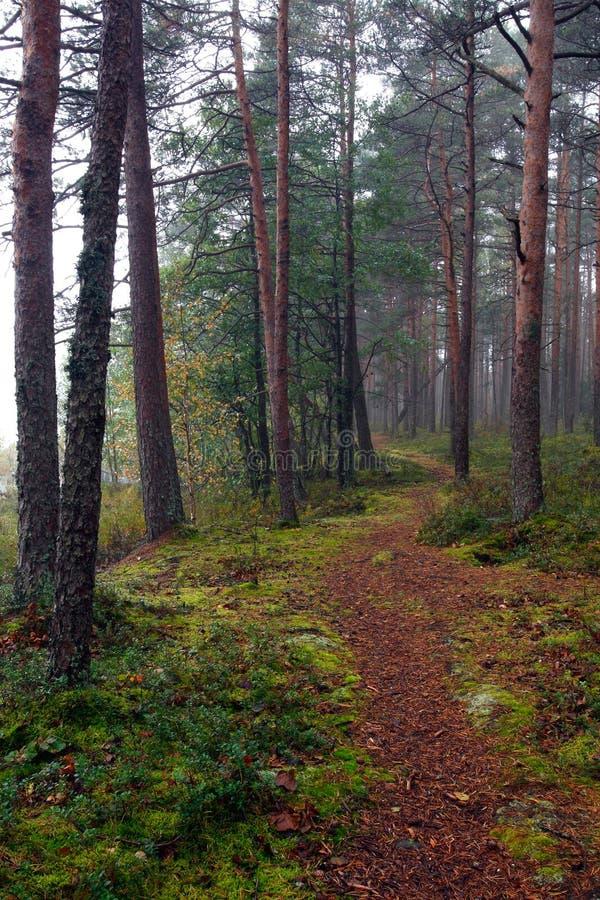 Download Walking path stock image. Image of peaceful, beautiful - 19009753