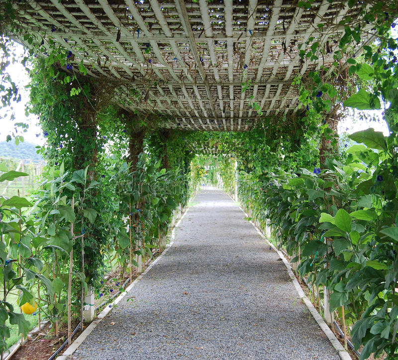 Walking path. A garden walking path with roof stock images