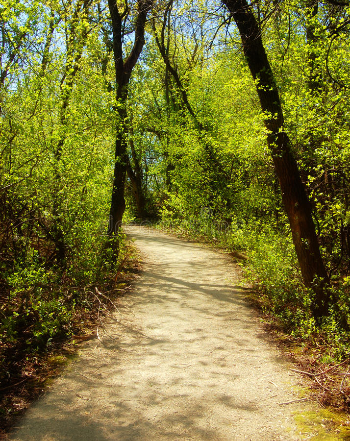 Download Walking path stock image. Image of springtime, landscape - 26470677