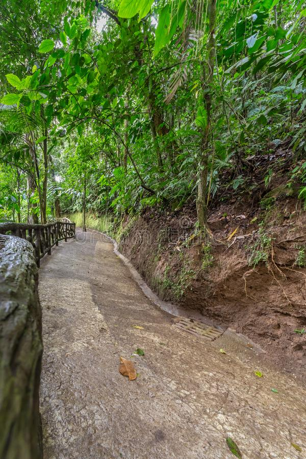 Walking path along the jungle floor in a rainforest. In Mistico Park Costa Rica stock photos
