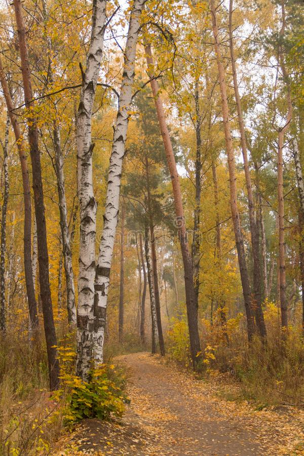 Walking path in the autumn forest in Ukraine royalty free stock images