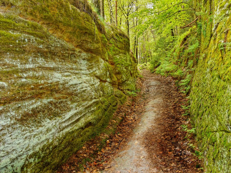 Walking Path, Forest Trail stock photos
