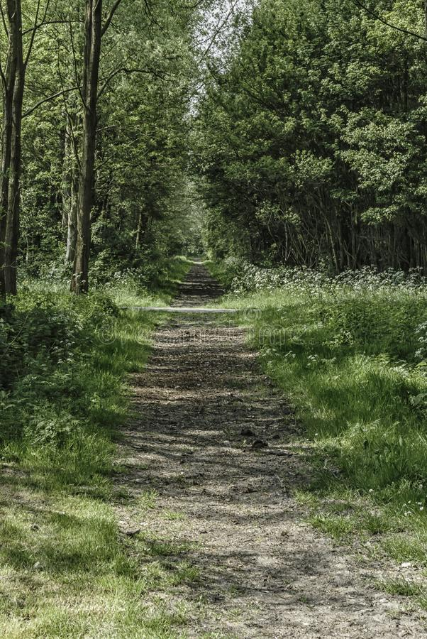 Walking path in the forest royalty free stock images