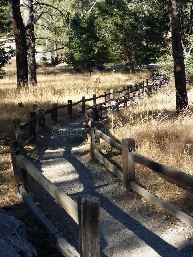 Walking path in the forest. Winding walking path in the forest with wooden fence around it covered with shade from the high pine trees above and meadow grass royalty free stock image