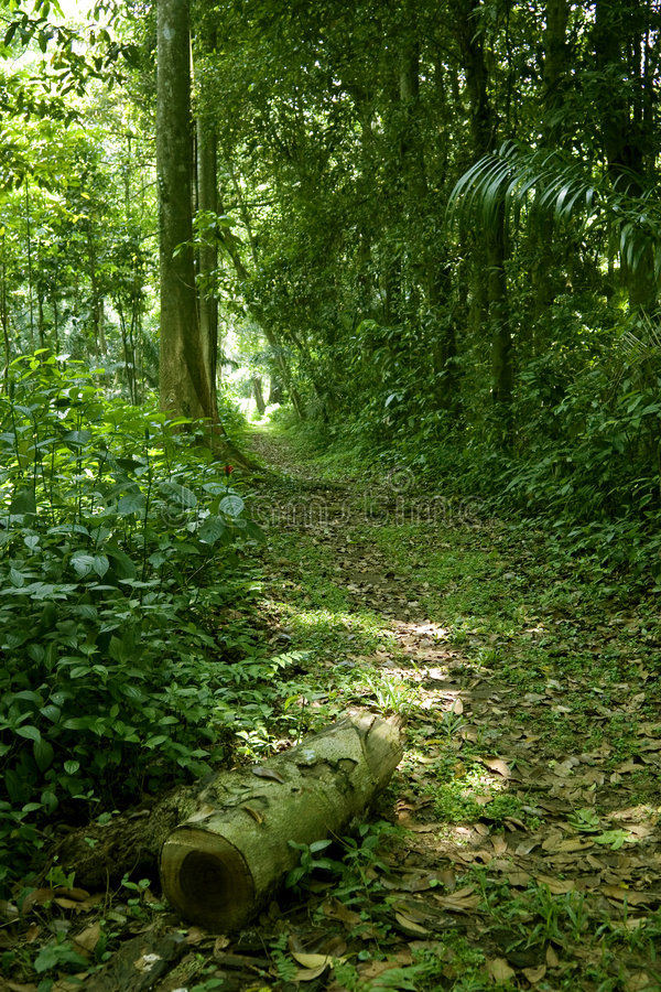 Download Walking path in the jungle stock photo. Image of rain - 3493520