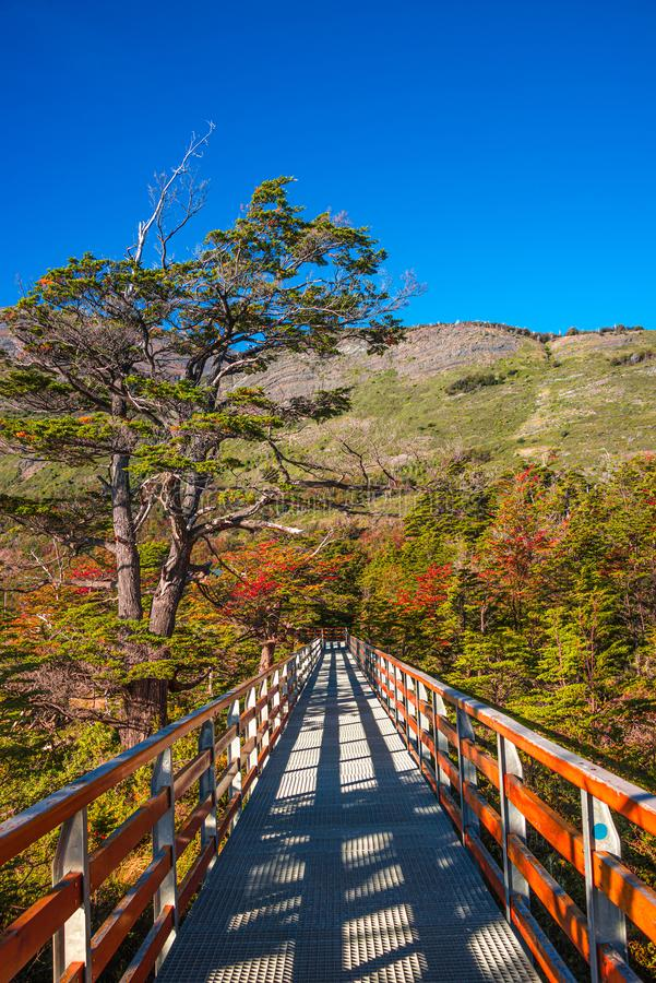 Walking path at Lago Argentino near huge Perito Moreno glacier in Patagonia in golden Autumn, South America. Sunny day, blue sky royalty free stock photography