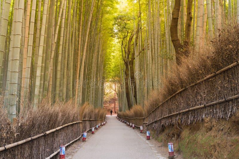 Walking path leading to bamboo Arashiyama bamboo forest stock photo