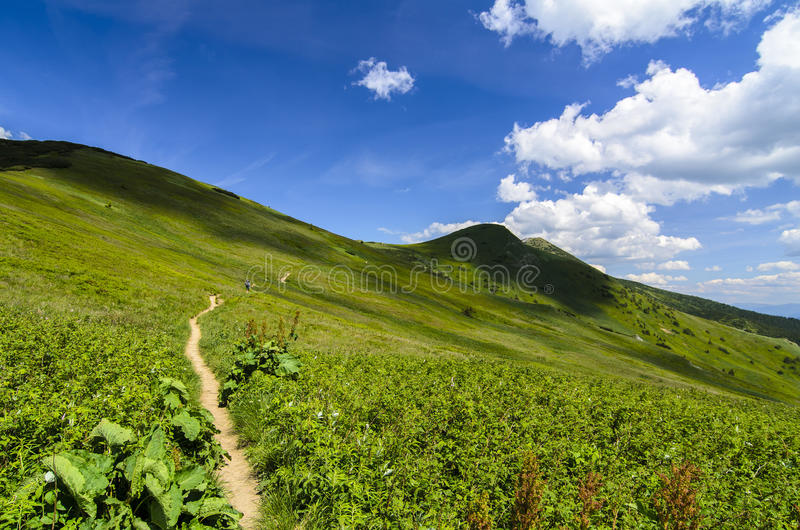 Walking path in the middle of the mountain field in National park Mala Fatra stock images