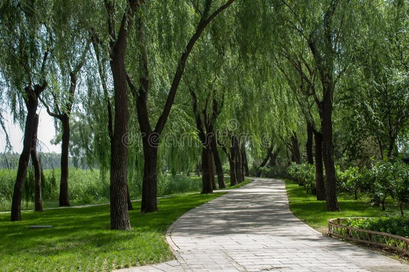 Walking path in a park surrounded by willow trees royalty free stock photography