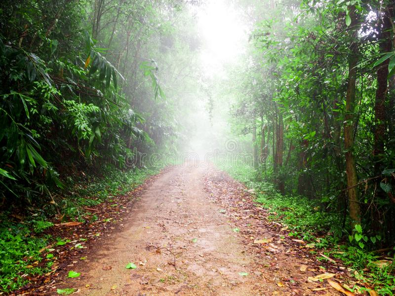 Walking path in tropical rain forest with foggy at National Park in Thailand. Trail through lush green forest royalty free stock photography