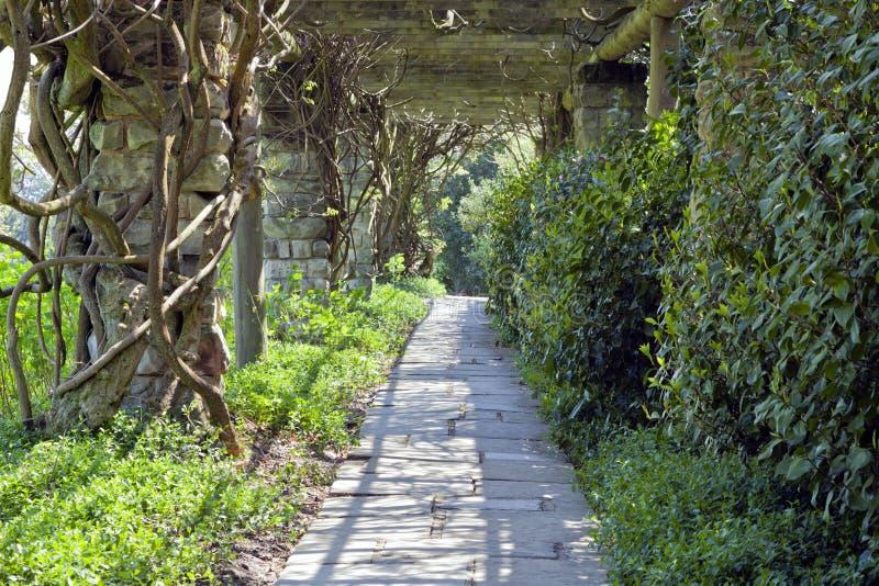 Walking path under branch arch in a spring garden stock photo