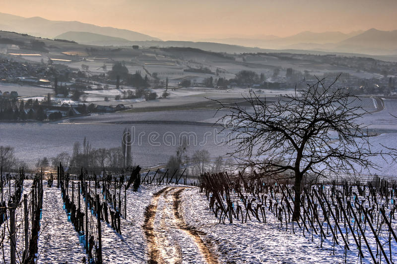 Walking path in the vineyards royalty free stock images