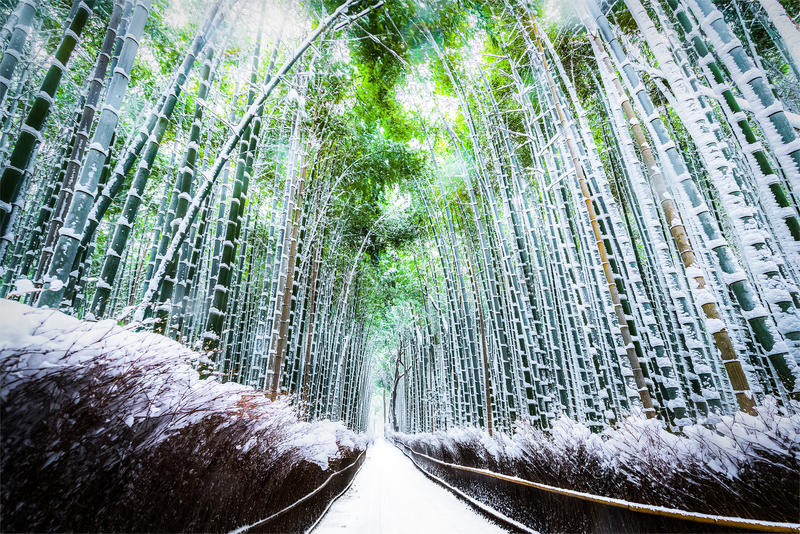 The walking paths and the bamboo groves stock image