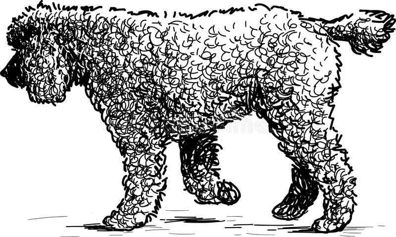 Walking poodle royalty free illustration