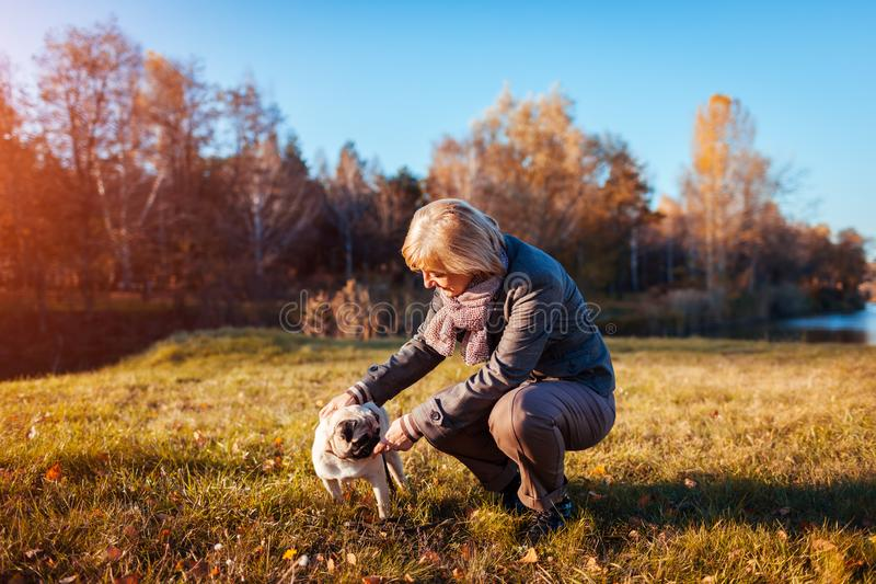 Walking pug dog in autumn park by river. Happy woman playing with pet and having fun with best friend. Outdoors royalty free stock photo