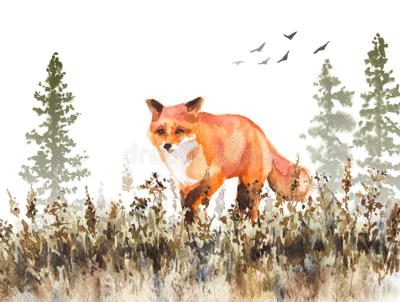 Walking Red Fox Sketch vector illustration
