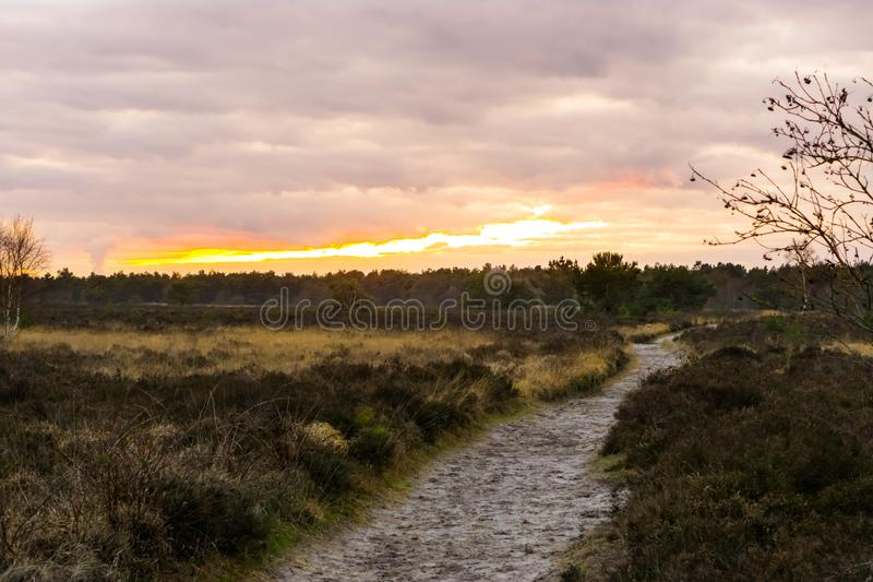 Walking road through a heather landscape in the forest at sunset, colorful effect in the sky and clouds stock photo