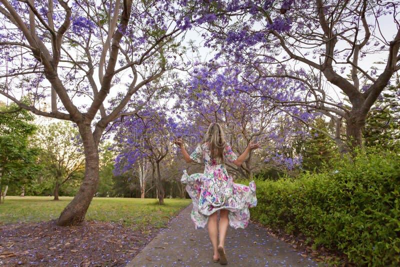 Walking among the rows of purple Jacaranda trees royalty free stock photos