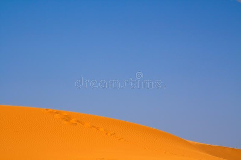 Download Walking on Sahara stock image. Image of horizon, footstep - 9565735
