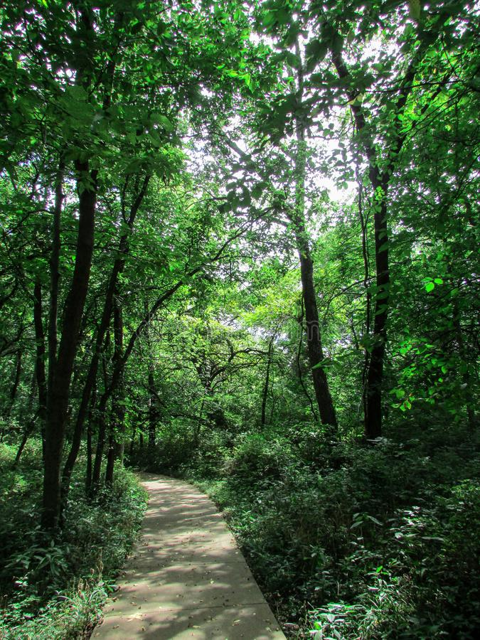 A secluded walking path in the woods in Summer. A secluded walking trail in the woods at a local park on a Summer afternoon. The sun pokes through this lush royalty free stock photos