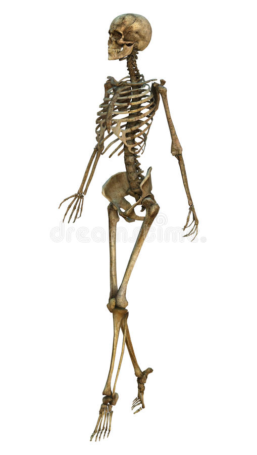 walking skeleton stock illustration - image: 40925093, Skeleton
