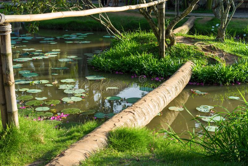 Walking small bridge made from coconut tree body in Asia.  royalty free stock image