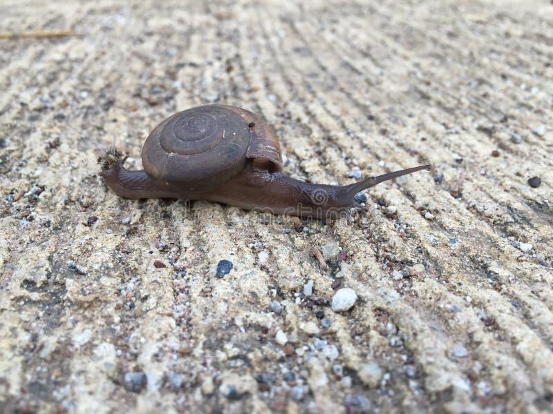 Walking snail stock photography