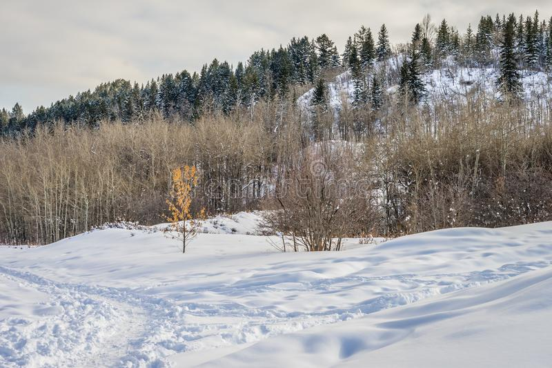 A winter hike through Edworthy Park stock images