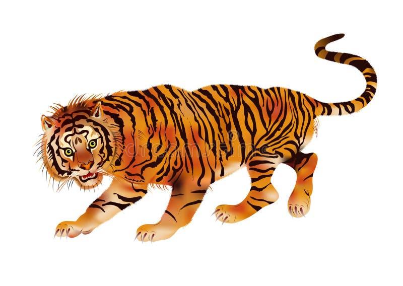 Walking Tiger Stock Images