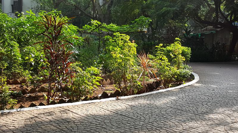 Walking track in neighborhood garden. A brightly sunlit walking path paved with pattern tiles set up in the garden with small plant trees lit up in morning sun stock images