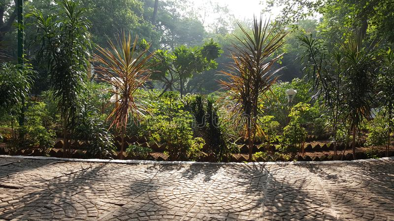 Walking track in neighborhood garden. A brightly sunlit walking path paved with pattern tiles set up in the garden with small plant trees lit up in morning sun royalty free stock photos