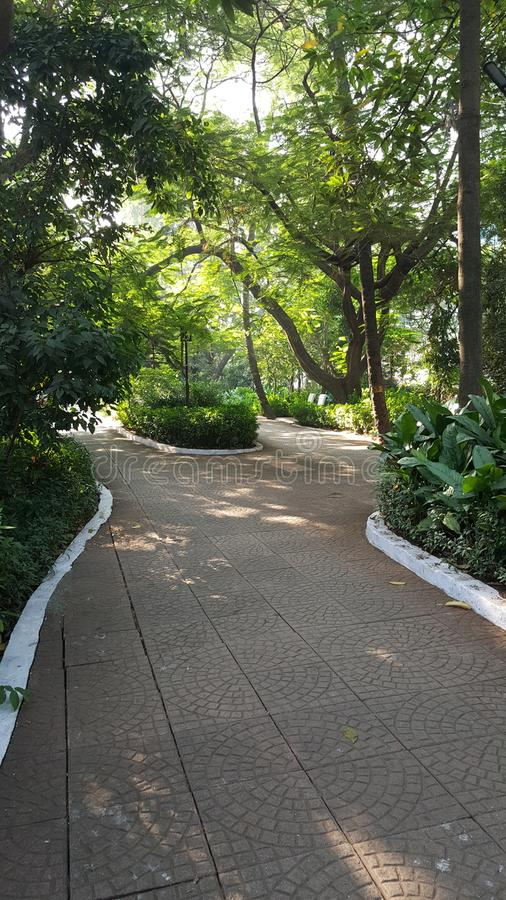 Walking track in neighborhood garden. A brightly sunlit walking path paved with pattern tiles set up in the garden with small plant trees lit up in morning sun royalty free stock image