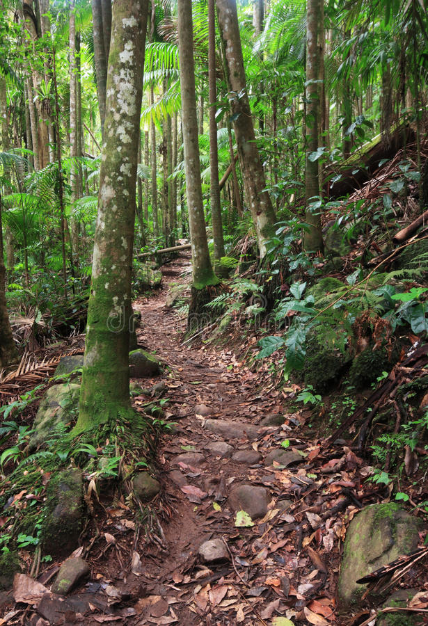 Walking track through rainforest. A walking track winds through Bangalow Palms and subtropical rainforest, northern NSW, Australia stock photo