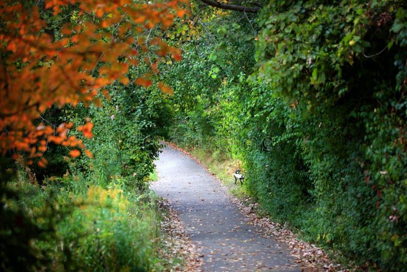 Download Walking trail stock photo. Image of yellow, walk, nature - 27141232