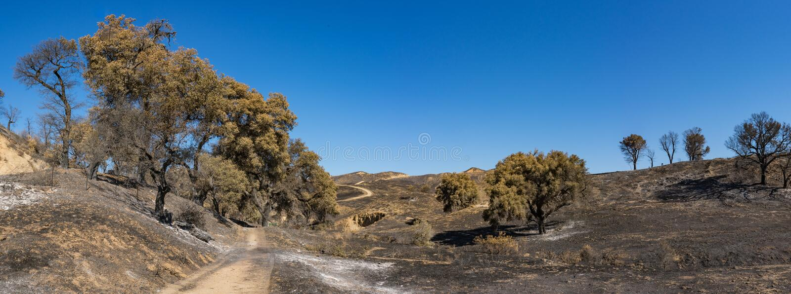 Walking Trail in Burn Zone stock photos